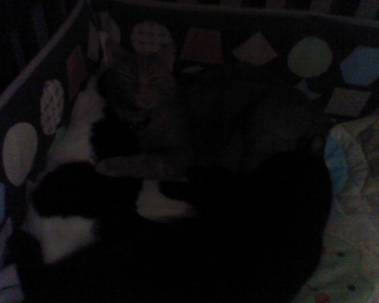 Cats Sleeping In Crib 2