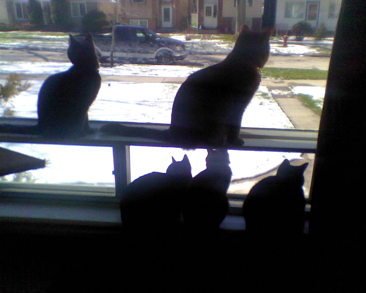 The Gang Looking Out The Window