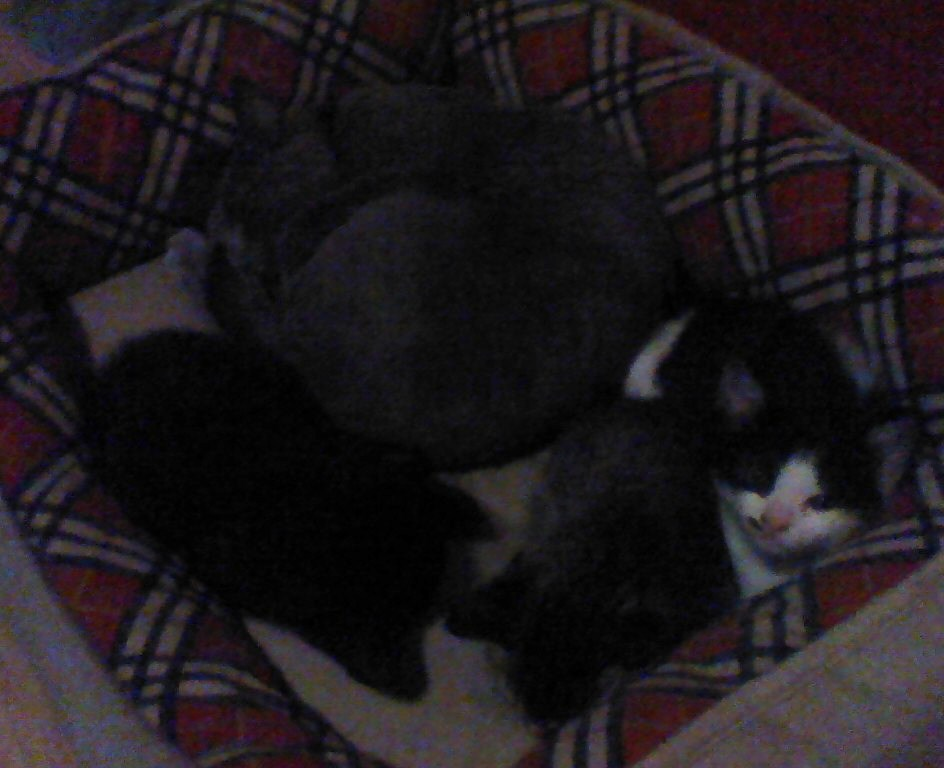 Shadow Sleeping With The Kittens 2