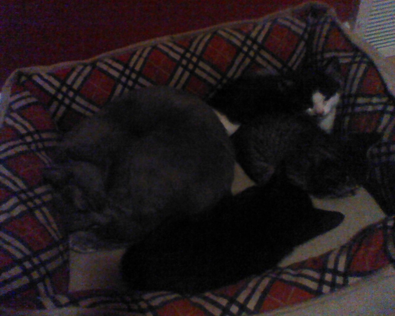 Shadow Sleeping With The Kittens 3