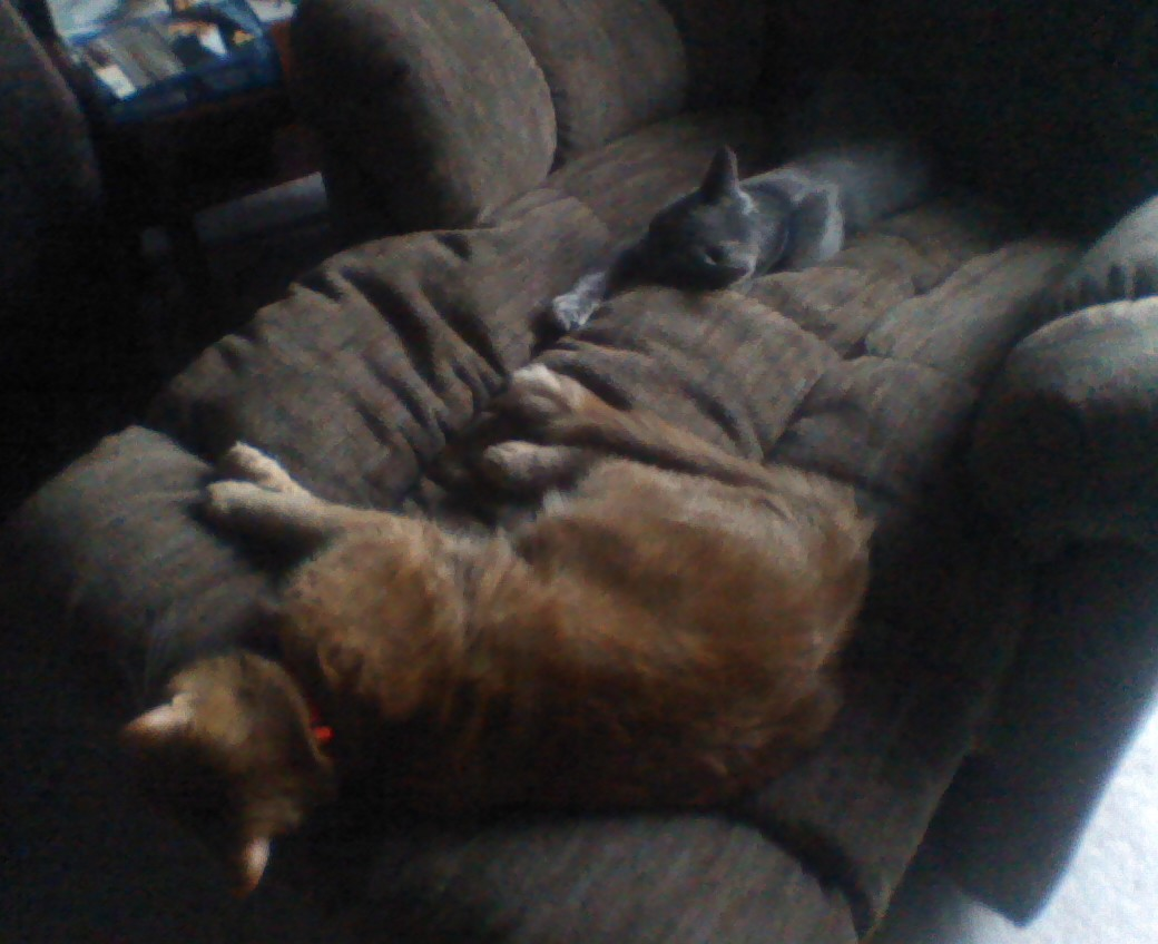 Cats Stealing My Chair