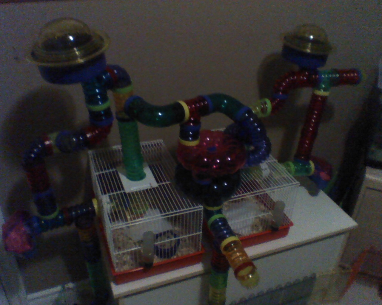 Remmy's Newest Cage Set-Up
