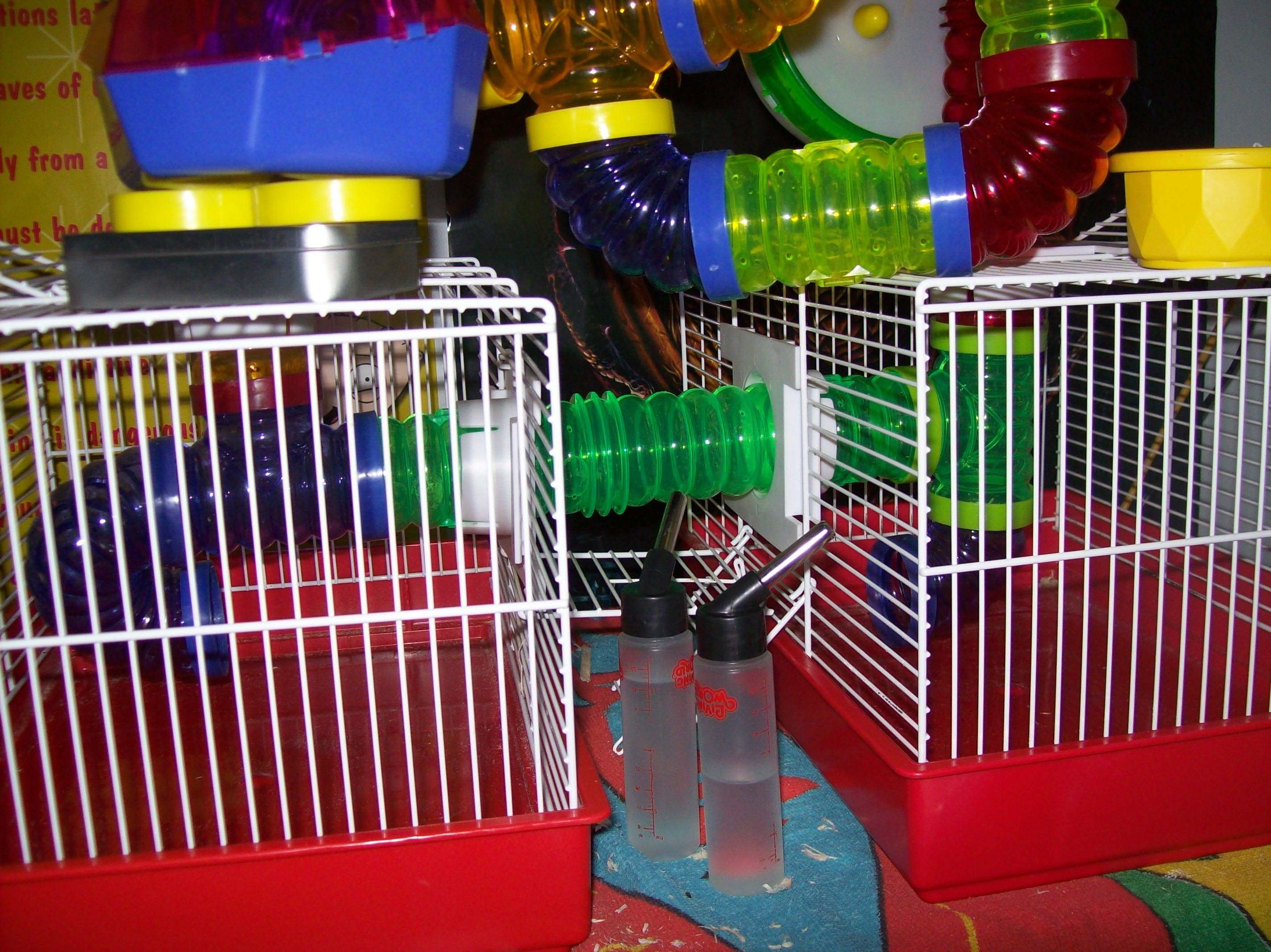 Ebichu's Empty Cages