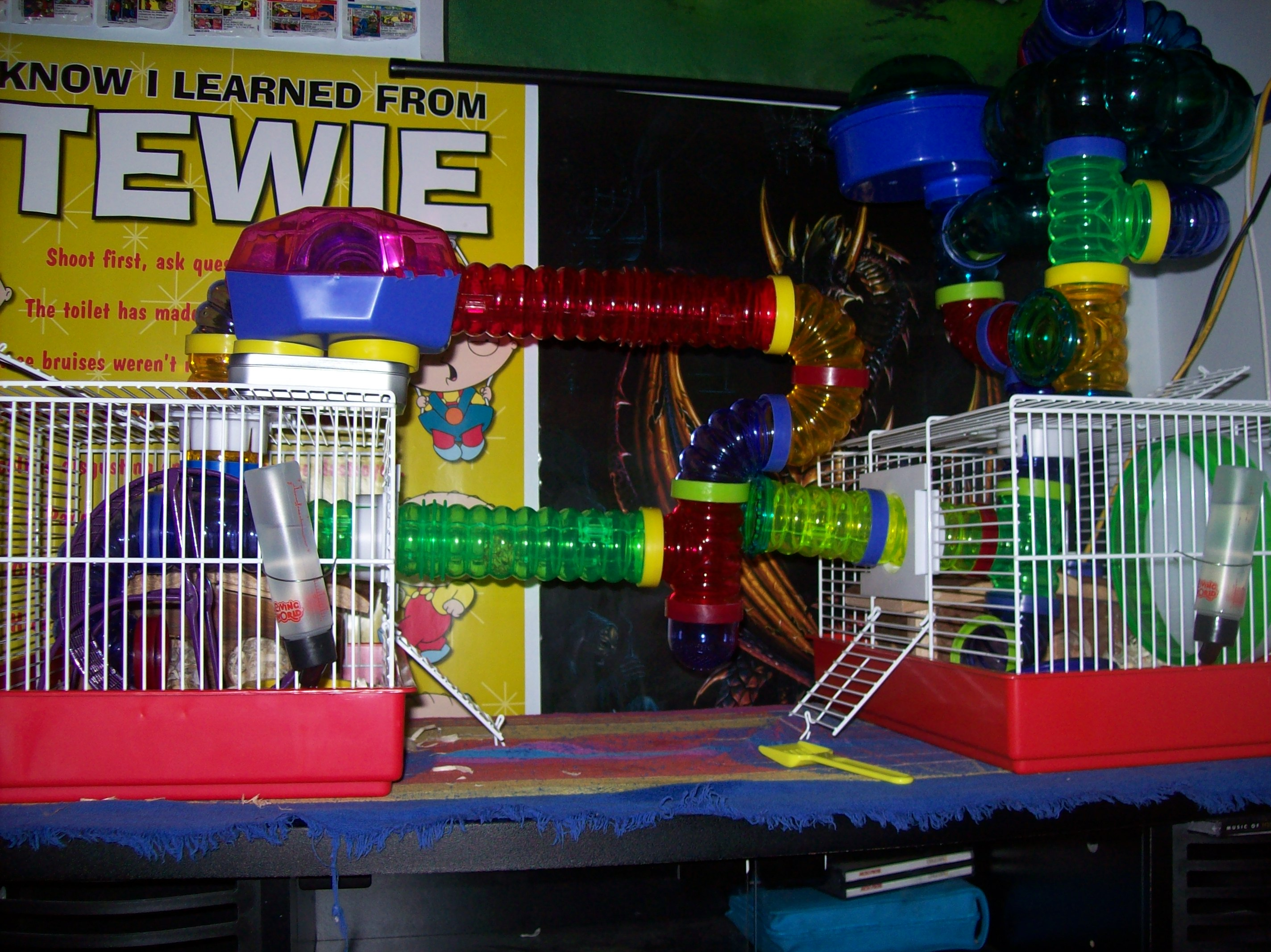 Remus And Romulus's Initial Cage Setup