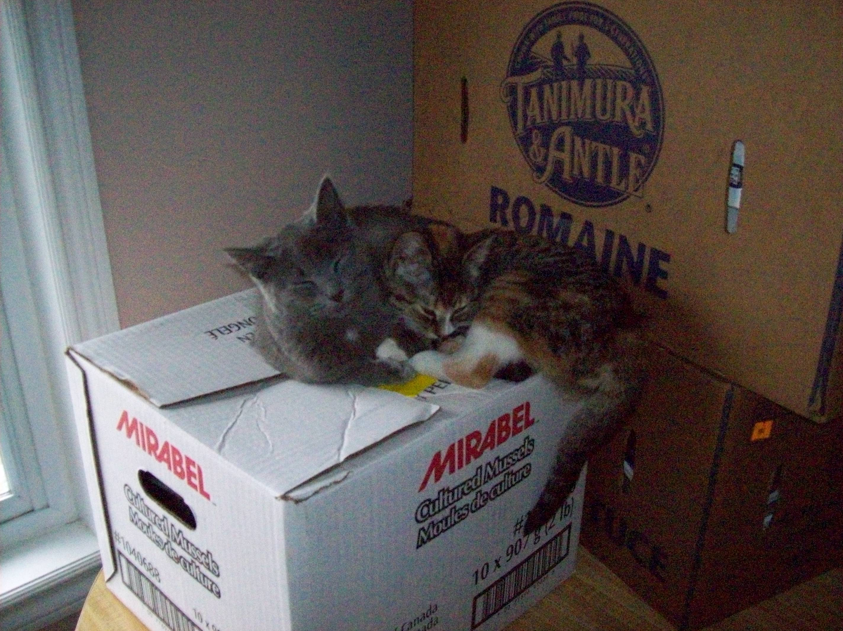 Cats Sleeping On Box
