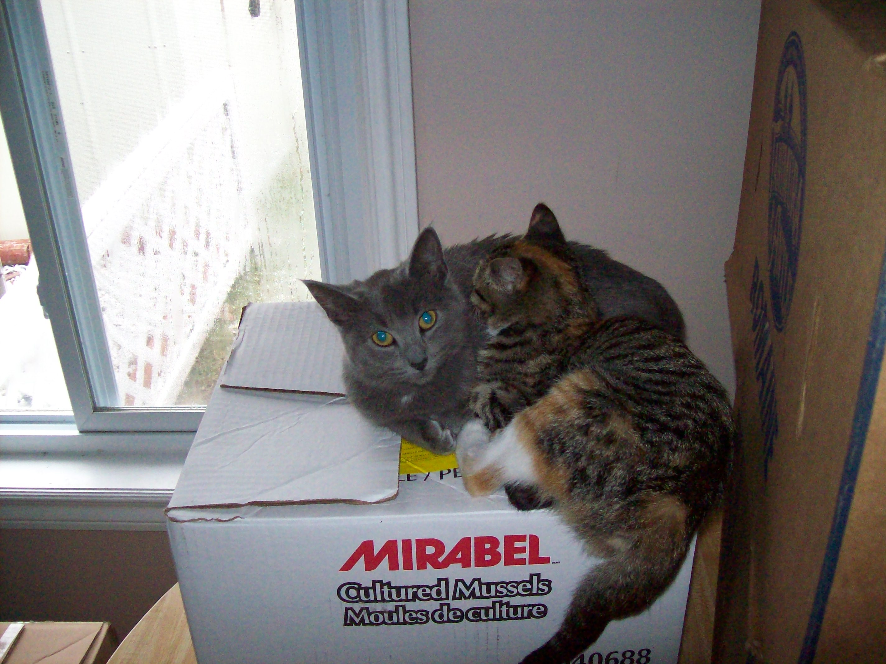 Cats On Box