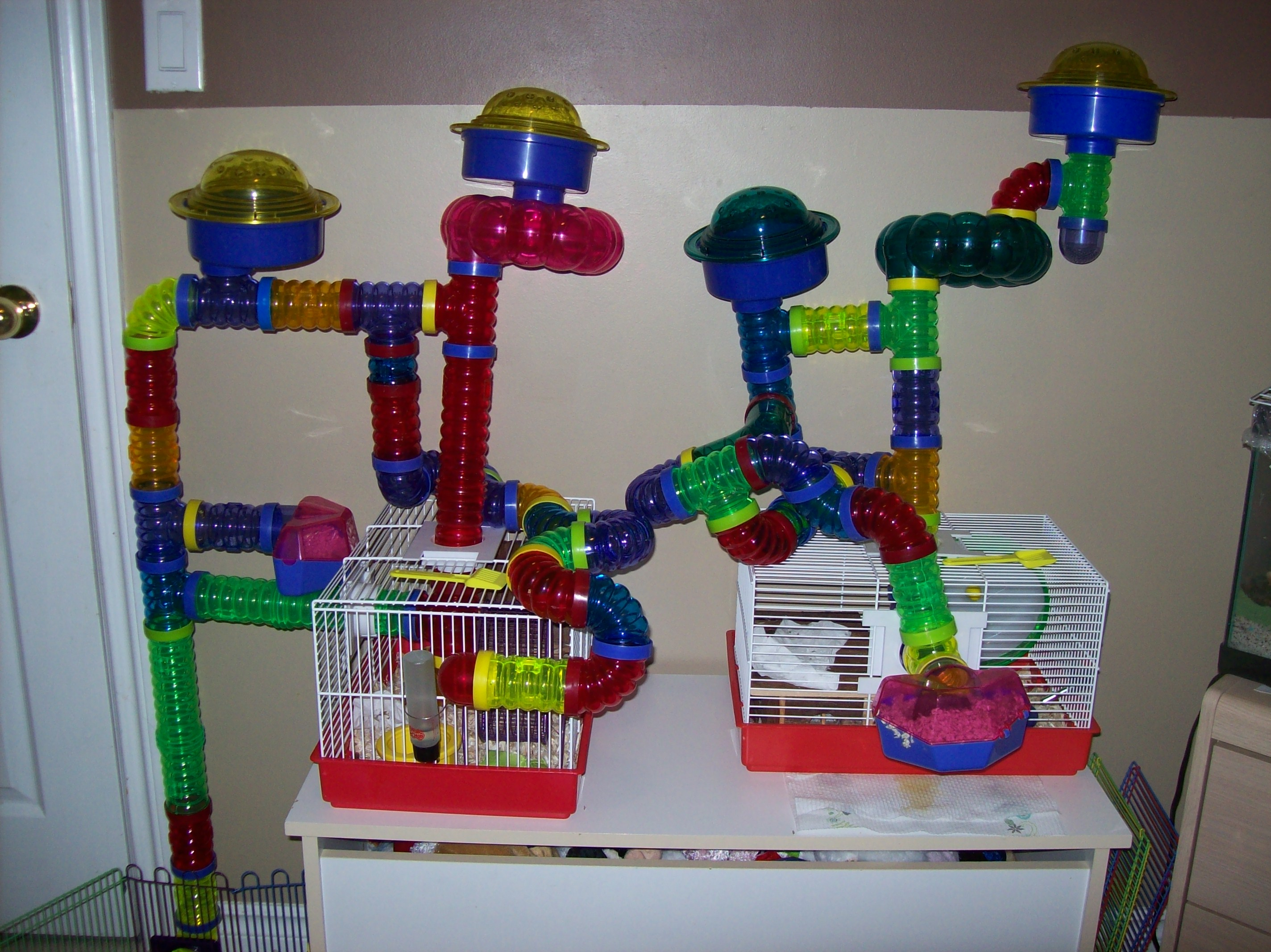 Remmy And Rommy's Current Cage Set-up