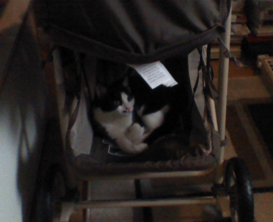 Muu Sleeping In The Stroller
