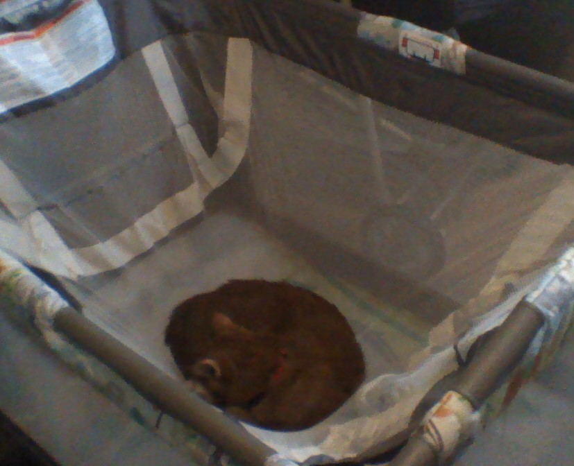 Calvin Sleeping In The Playpen