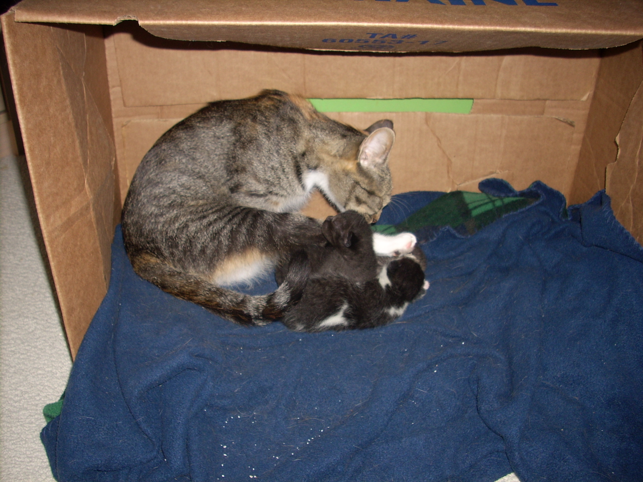 Cin Looking After Her Babies
