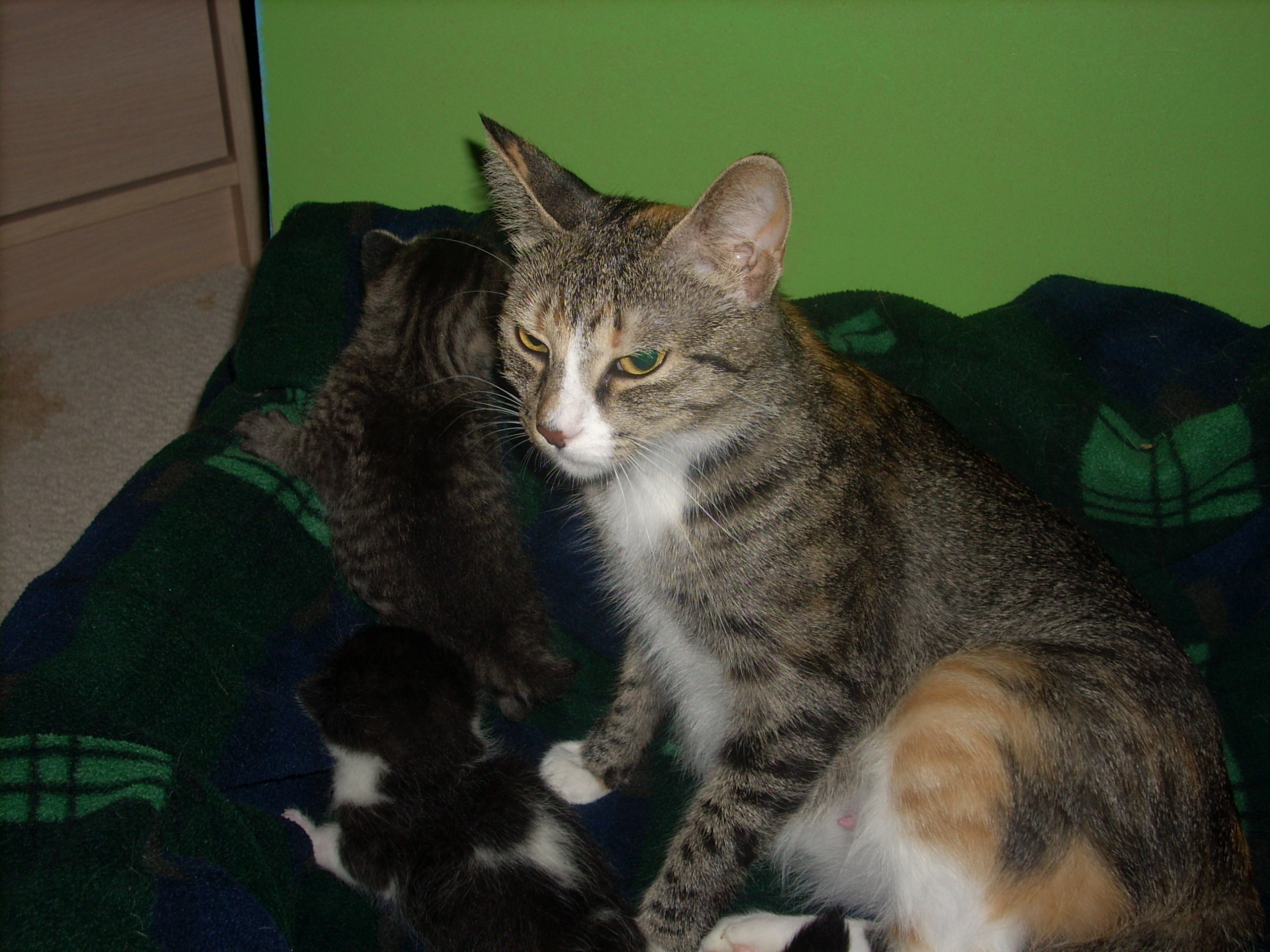 Cin And Her Babies 2