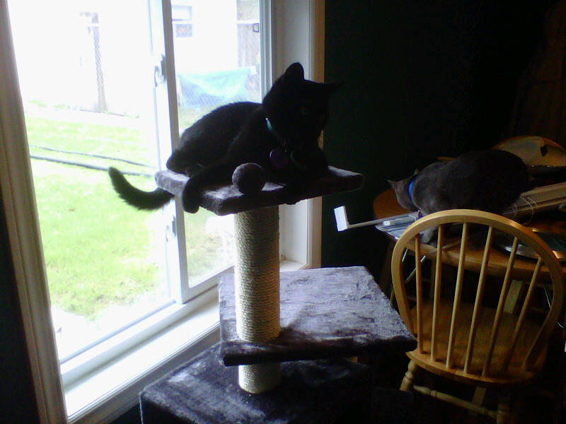 New Scratching Post