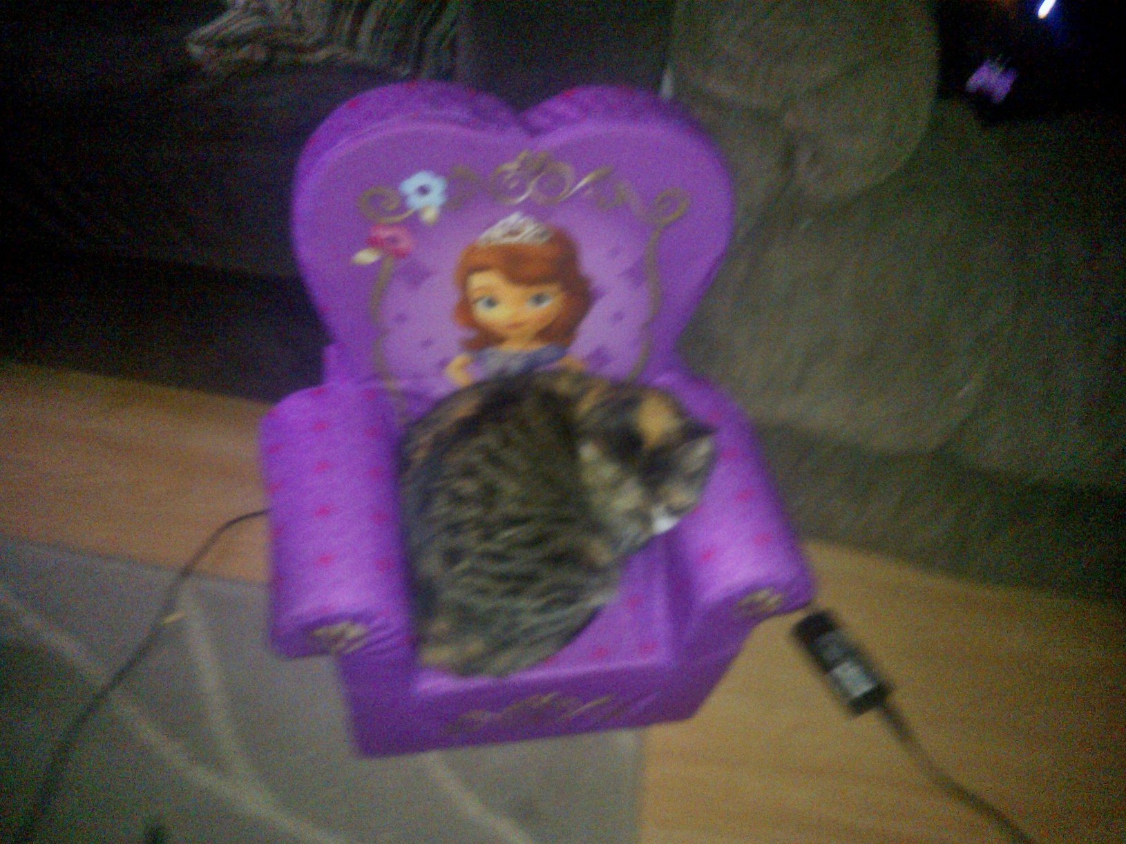Cinnamon Claiming Ryder's New Chair
