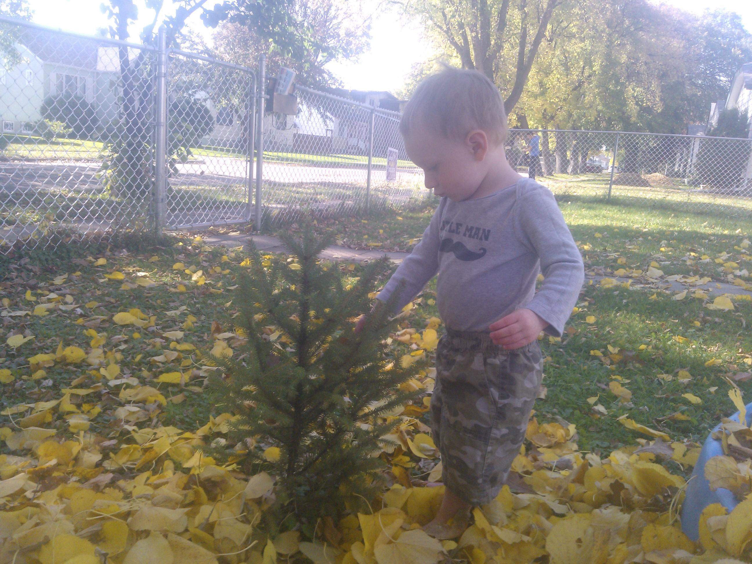 Ryder Playing With Evergreen