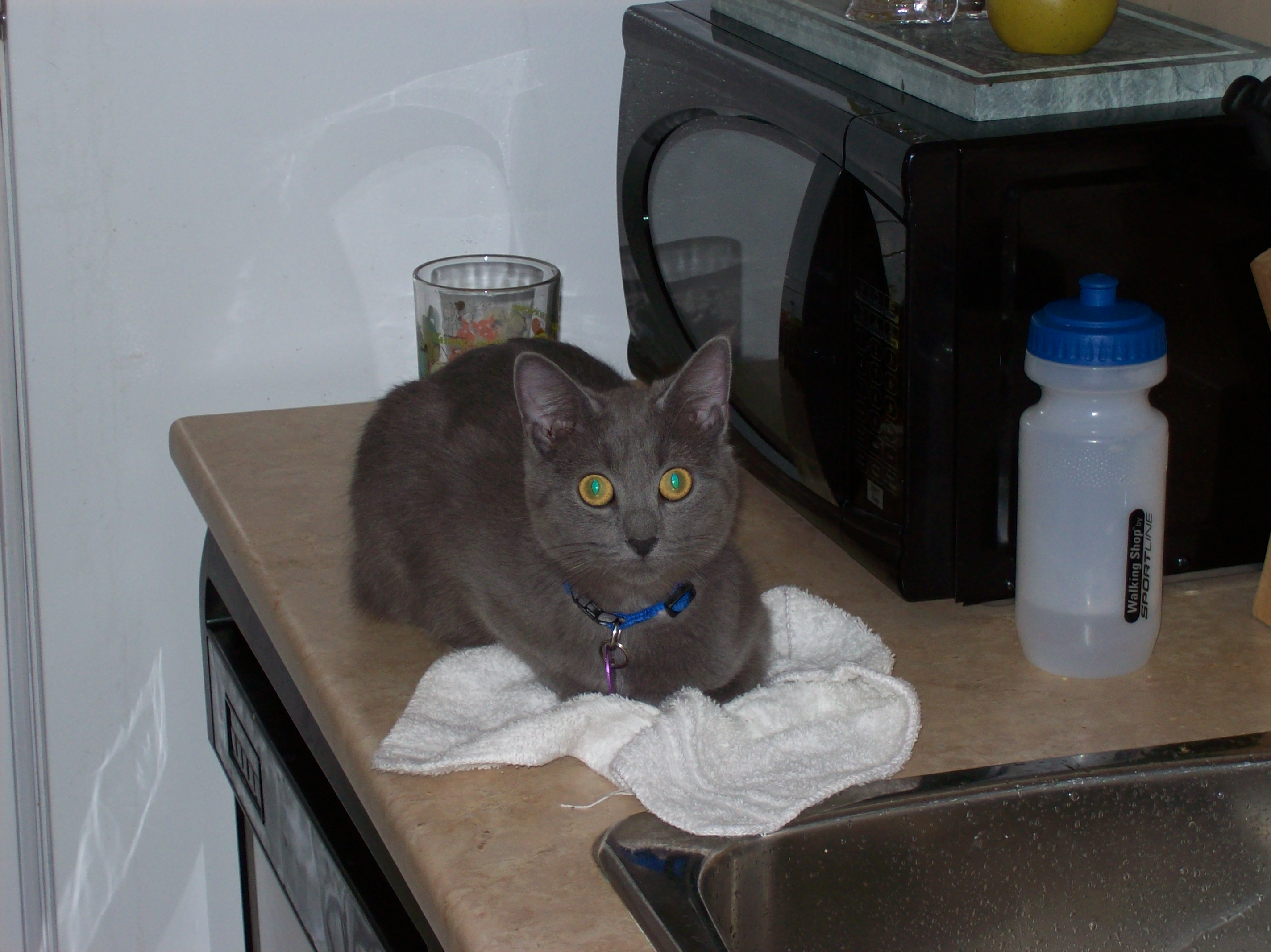 Shadow On The Counter