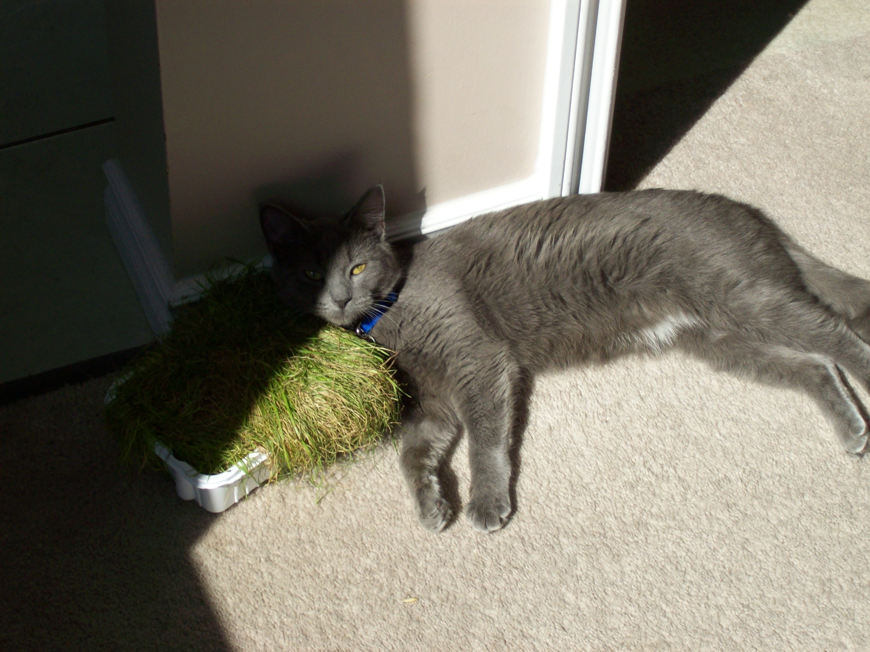 Shadow Lying In The Cat Grass