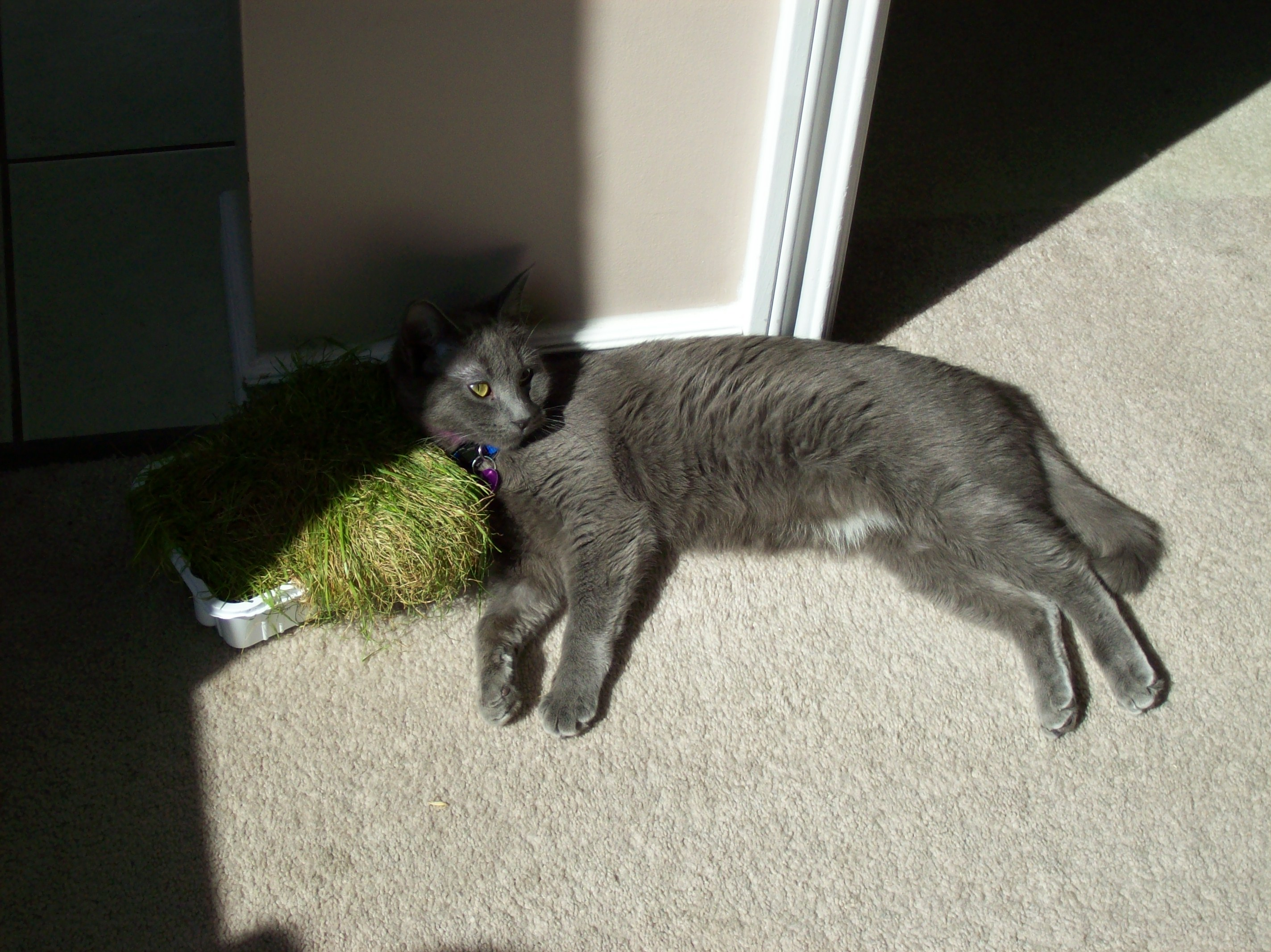 Shadow Lying In The Cat Grass 3