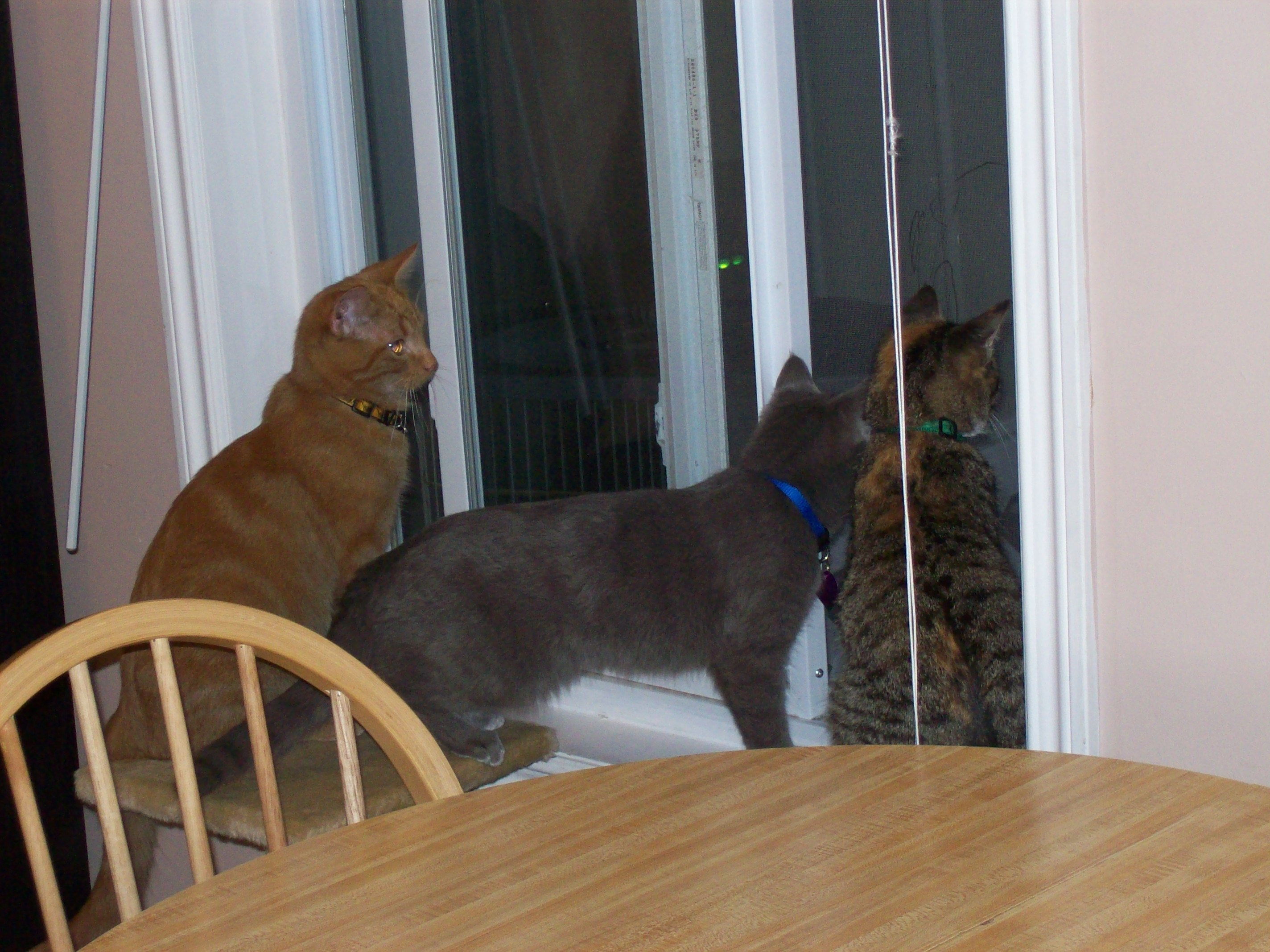 All Three Looking Out Open Window