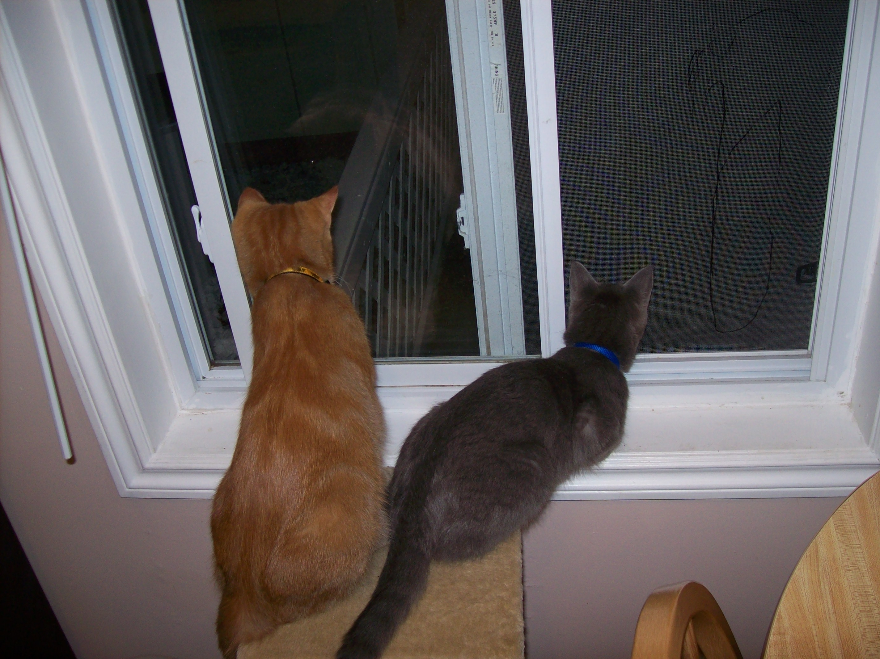 Shadow And Calvin Looking Out